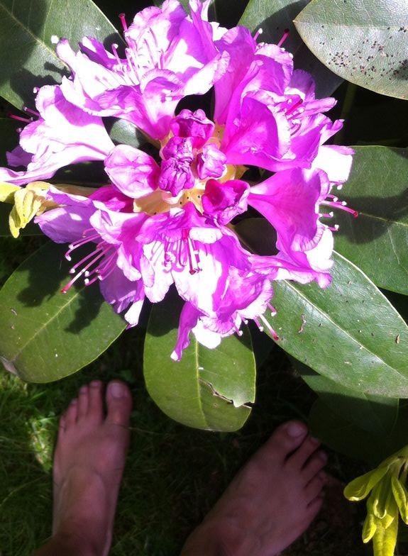 rhodondendron met blote voeten
